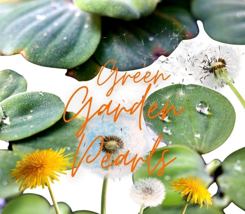 TAUTROPFEN PRO YOUTH SOLUTIONS – Beauty-Perlen aus dem Garten der Natur