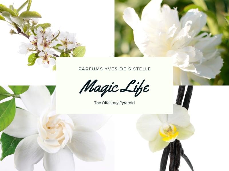 © MAGIC LIFE Parfums Yves de Sistelle - die olfaktorische Pyramide
