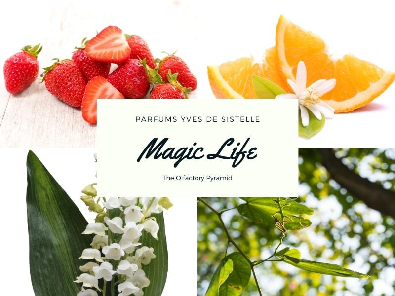 © MAGIC LIFE Parfums Yves de Sistelle - die olfaktorische Pyramide II