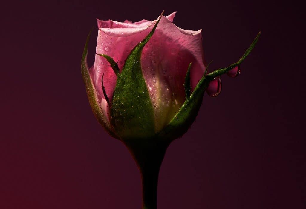 OLFACTIVE STUDIO Sepia Collection Part 2 – Ein florales Blütenherz für die Sinne